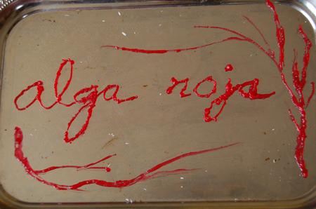 Alga roja grande